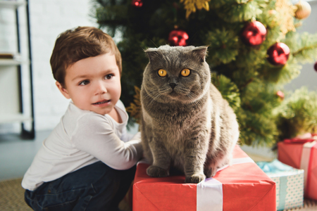 cute boy with scottish fold cat on gift box near christmas tree