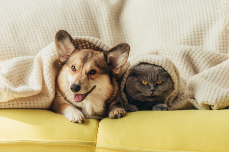 funny pets lying under blanket on sofa Stockfoto