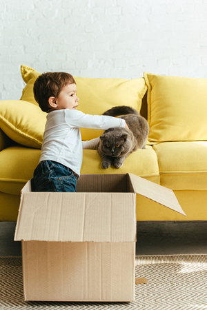 little cute boy playing with cat in cardboard box at home