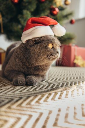 grey furry scottish fold cat in santa hat lying on floor under christmas tree Stock Photo