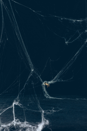 scary halloween background with white web and spider Stock Photo