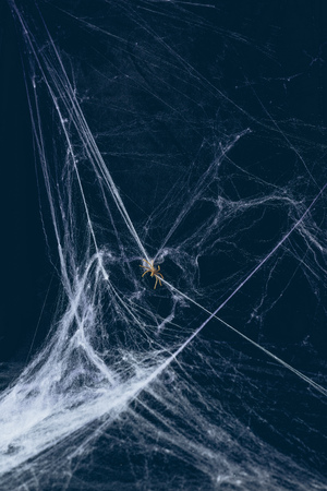 white web and spider in darkness, creepy halloween decor Banque d'images