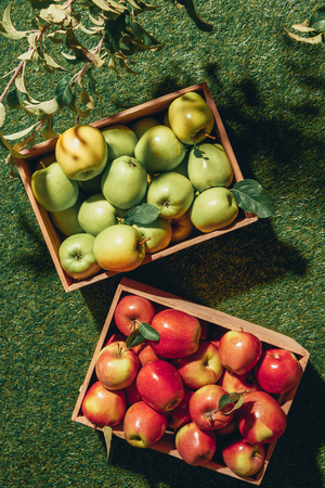 top view of green and red apples in wooden boxes with apple tree leaves