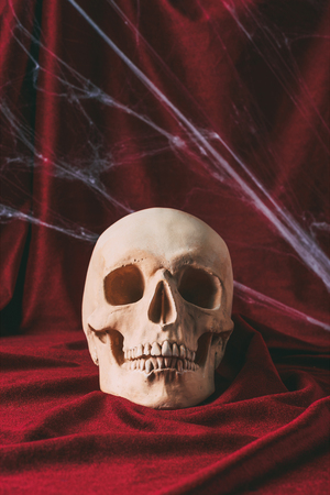 creepy halloween skull on red cloth with spider web Stock Photo