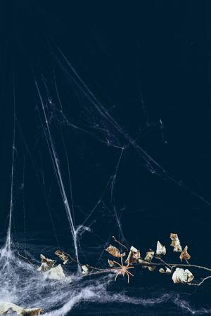 dry branch in spider web in darkness, halloween background