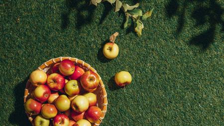 organic apples in wicker basket with apple tree leaves an grass Stok Fotoğraf