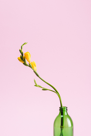 close up view of beautiful yellow fresia flower in glass bottle isolated on pink