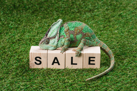 beautiful bright green chameleon sitting on wooden cubes with word sale