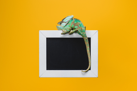 beautiful bright green chameleon on blackboard in white frame isolated on yellow