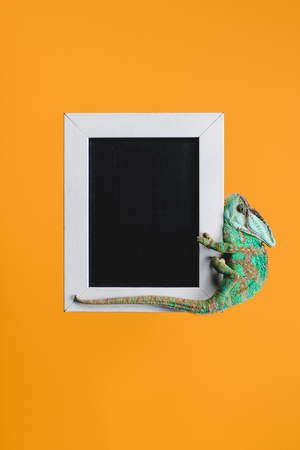 beautiful bright green chameleon on blackboard in white frame isolated on orange Stock fotó