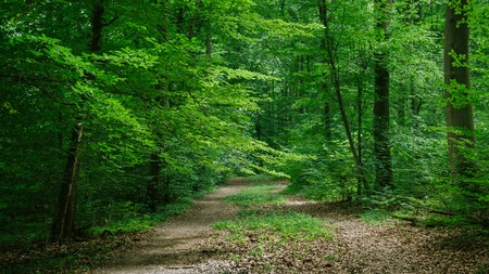 path in green beautiful forest in Wurzburg, Germany