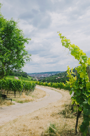 road to town and vineyard on sides in Wurzburg, Germany