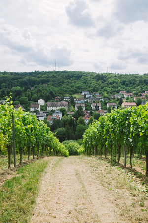 road to village and vineyard on sides in Wurzburg, Germany