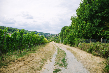 road to village and vineyard with trees on sides in Wurzburg, Germany