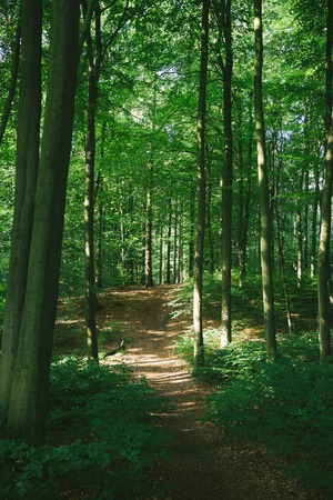 trees and path in beautiful green forest in Hamburg, Germany Stock Photo