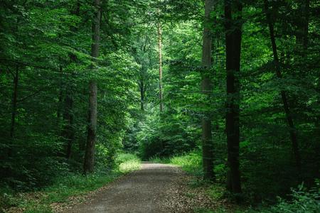 path in green beautiful dark forest in Wurzburg, Germany