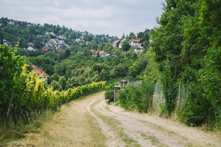 rural road to village and vineyard with trees on sides in Wurzburg, Germany