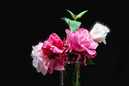 close-up view of beautiful wet pink and white eustoma flowers in transparent vase on black Banco de Imagens