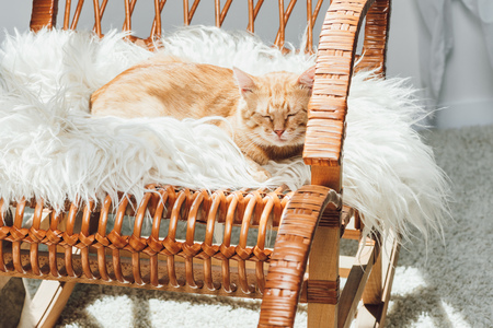cute domestic ginger cat sleeping on rocking chair in living room Standard-Bild - 108828809