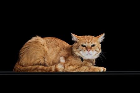 irritated cute tabby cat lying isolated on black