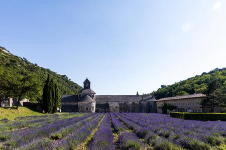 beautiful historic Abbey of Senanque and lavender flowers, Gordes, Luberon, Provence 版權商用圖片