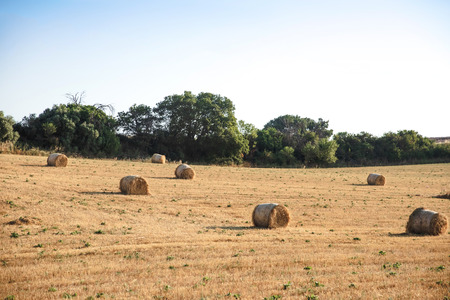 dry hay bales on agricultural field at provence, france