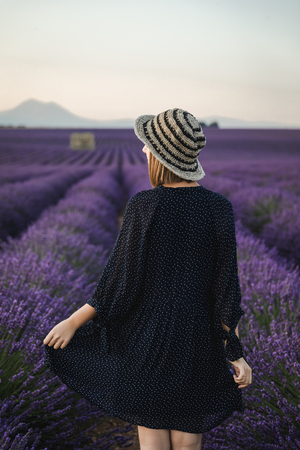 back view of young woman walking between blooming lavender flowers, provence, france