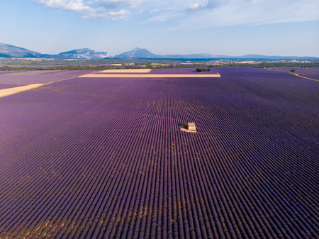 aerial view of lonely farm on beautiful blooming lavender field in provence, france