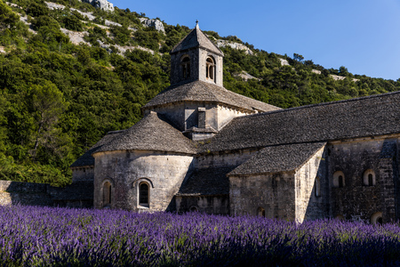 historic Abbey of Senanque and blooming lavender flowers, Gordes, Luberon, Provence