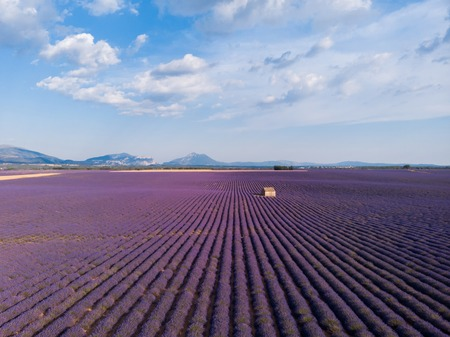 aerial view of farm on beautiful blooming lavender field in provence, france