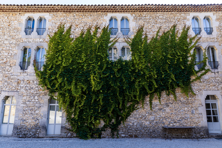 old stone building with green ivy on wall and decorative windows, provence, france 版權商用圖片