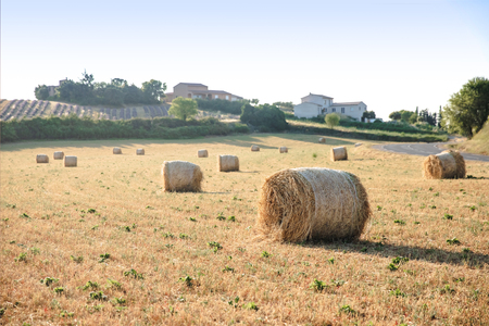 hay bales on beautiful agricultural field and farm in provence, france