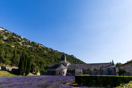 historic Abbey of Senanque and beautiful lavender flowers, Gordes, Luberon, Provence