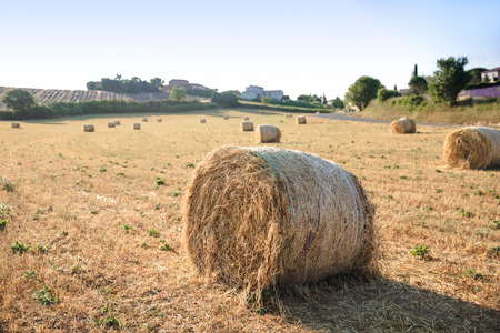 hay bales on beautiful agricultural field in provence, france 写真素材