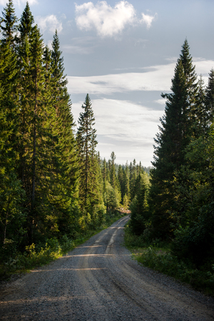 dirt road leading through evergreen trees, Trysil, Norways largest ski resort Banco de Imagens