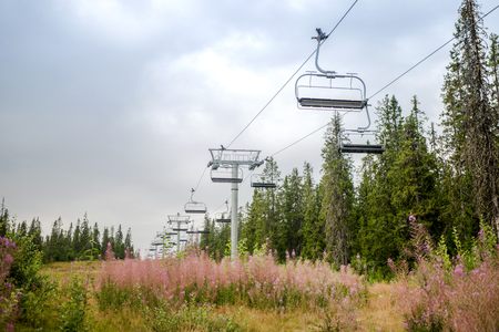 ski lift over field with lupine flowers, Trysil, Norways largest ski resort Stock Photo