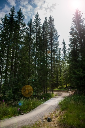 path leading through evergreen trees in sunlight, Trysil, Norways largest ski resort