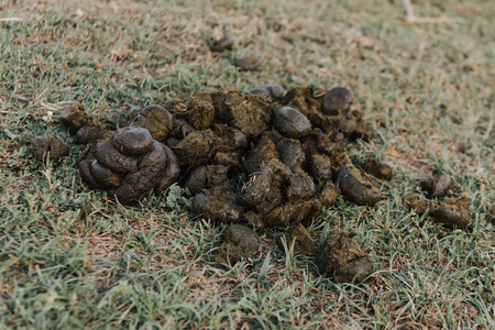 close up of horse faeces on grass