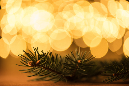 close up view of pine tree branch and golden bokeh lights backdrop Stock Photo