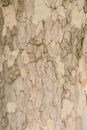 close-up shot of light cracked tree bark
