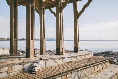 cat sitting near wooden construction at pier in Istanbul, Turkey Banco de Imagens