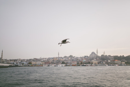 seagull flying over bay in Istanbul, Turkey Stock Photo