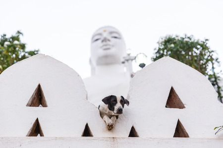 KANDY, SRI LANKA - JAN 17, 2017: selective focus of stray dog with religious monument on background, Asia