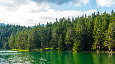 green forest and beautiful glacial Black Lake in Montenegro Reklamní fotografie