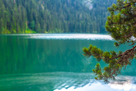 beautiful glacial Black Lake and pine branches in Montenegro Reklamní fotografie