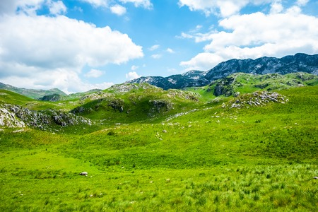 green grass and mountains in Durmitor massif, Montenegro Stock Photo