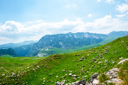 flock of sheep grazing on green valley in Durmitor massif, Montenegro Stock Photo