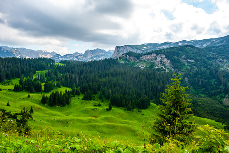 beautiful green valley with forest and mountains on background in Durmitor massif, Montenegro