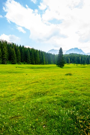 beautiful green valley with forest and blue sky in Durmitor massif, Montenegro
