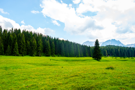 beautiful green valley with forest in Durmitor massif, Montenegro